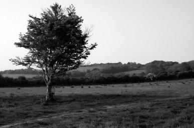 Caged Tree