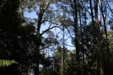 Blue-Mountains-Botanic-Gardens-25