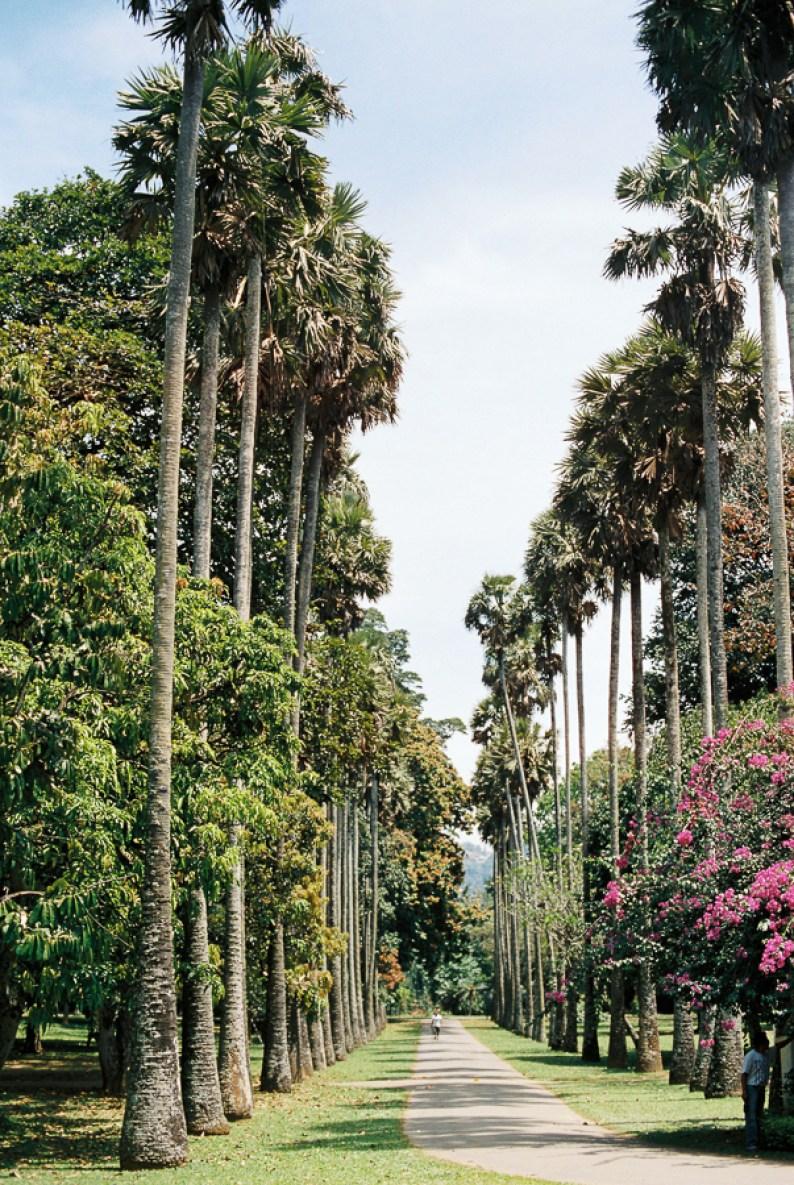Royal Botanical Gardens in Peradeniya