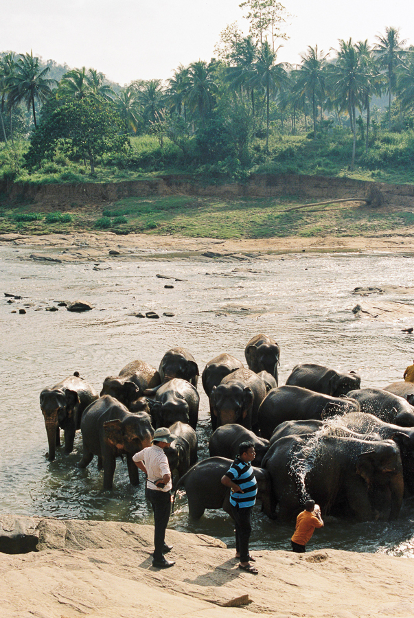 HDYTI at Pinnawela elephant orphanage | Keeping elephants cool