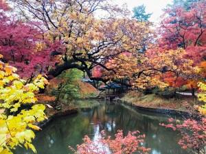 Autumn Sunset Inspirational Life Lessons, Seoul, South Korea