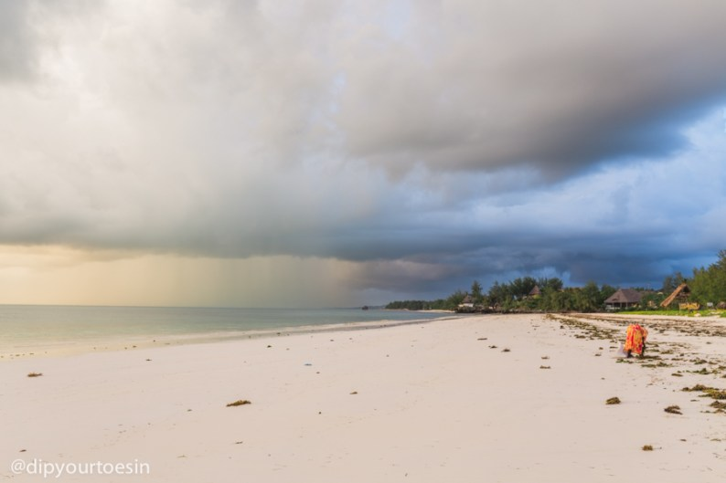 Zanzibar-HDYTI-245