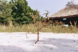 Making sense of Nigeria, A Lagos Perspective, Lekki Conservation Centre