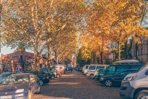 Leafy street in St. Pauli, Hamburg | Hamburg photo journal