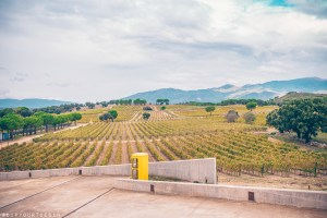 View of grape vines stretching to the Pyrenees mountains in Emporda