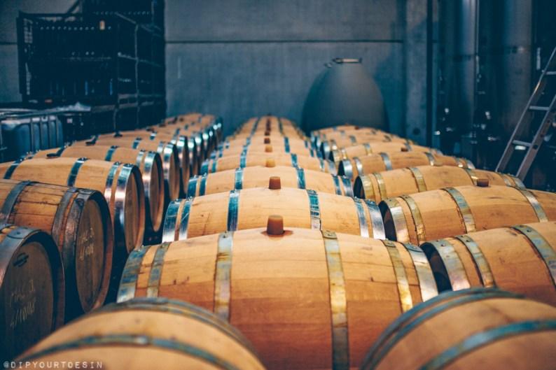 French oak barrels storing wine in cellar at Mas Llunes winery, DO Empordà