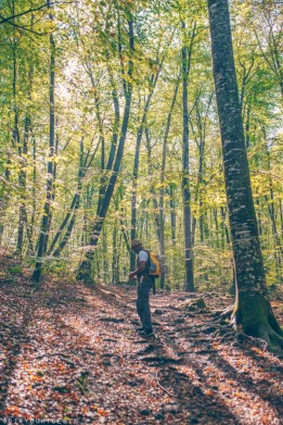 Omo walking among beech trees in the forest of La Fageda d'en Jordà practising mindfulness