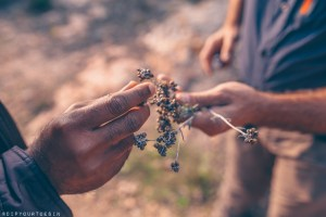 NaturalWalks looking for natural herbs with Evarist March | Costa Brava's Coastline