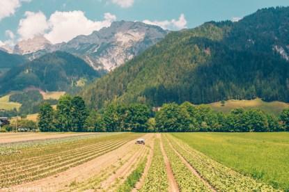 Organic farming contributes to wellness in Saalfelden Leogang