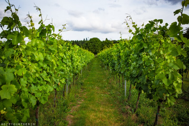 View of vineyards | Five Vineyards to Visit in Kent