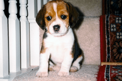 saidee in 1998, when we first brought her home.