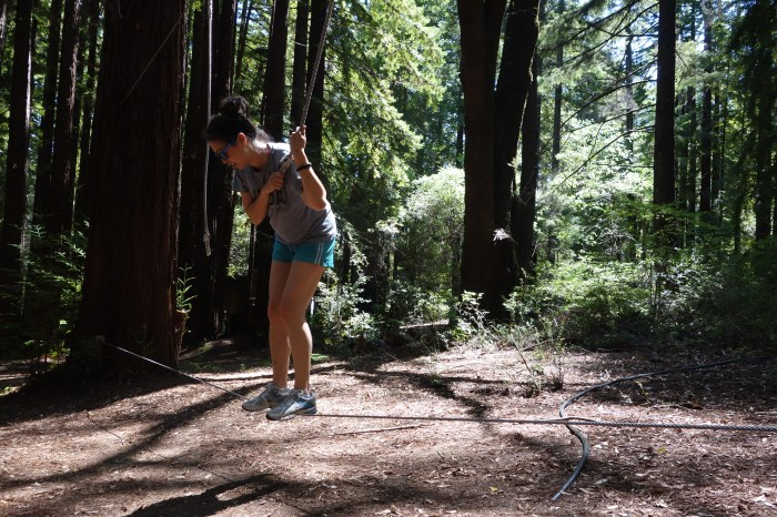 i spent much of 2014 just barely hanging on. (in the norcal redwoods, may 2014)