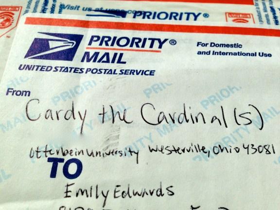 Cardy the Cardinal(s): aka my best friends