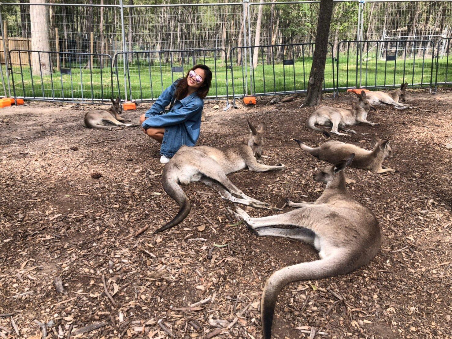寵物美容課程 澳洲
