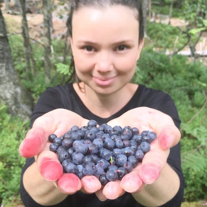 receita fácil, receitas com frutas vermelhas, receitas de tortas, sobremesas, receita de tortas doces, torta de mirtilo, frutas orgânicas, mirtilos, blueberry, feito em casa, bolo