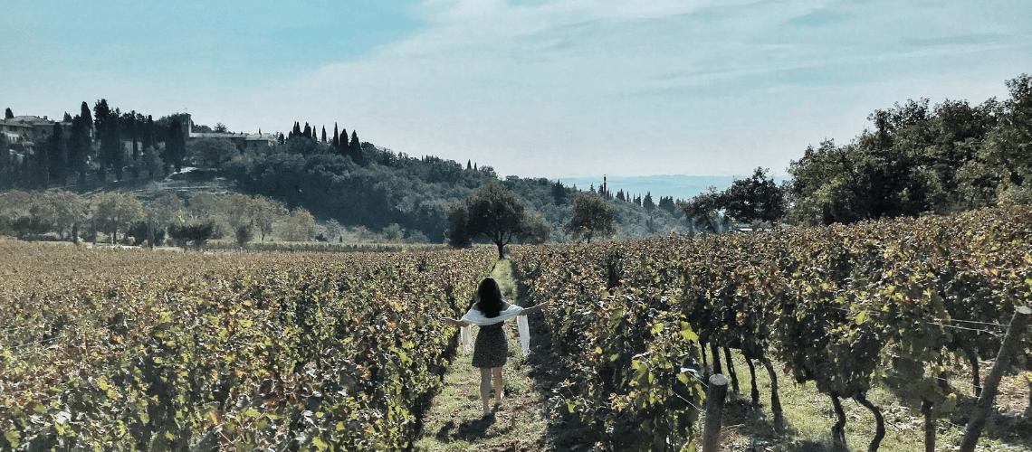 Fonterutoli – A beleza de uma vinícola centenária