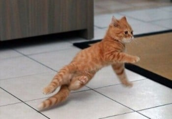 break_dancing_kitty