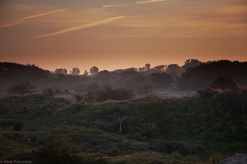 AWD, Eendenvlak bij zonsopkomst