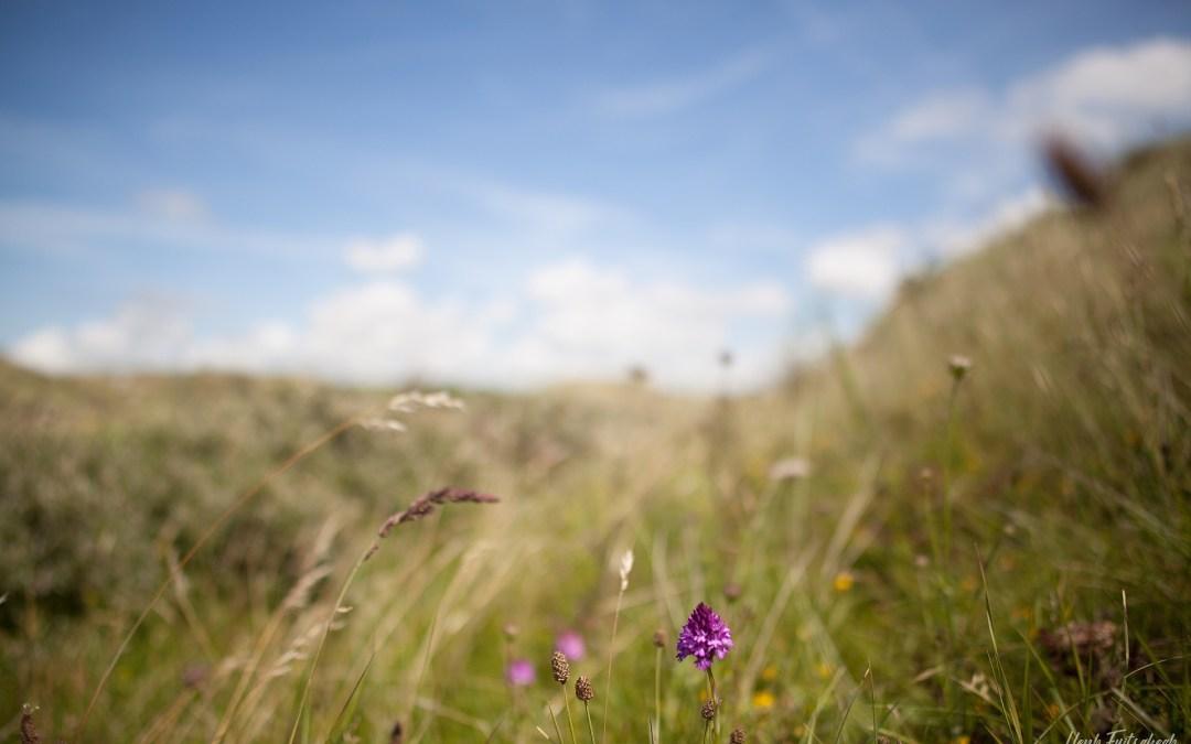Blog #063 Orchideeën aan de Noord-Hollandse kust