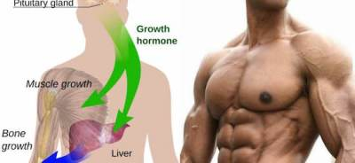 How to increase HGH secretion naturally?