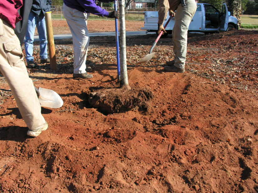 the backfill soil is used to fill the hole