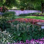 Top Plants For Underplanting Hgtv