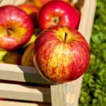 Apples and pears reduce your stroke risk