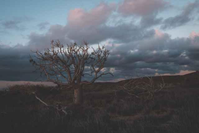 leafless tree growing in field