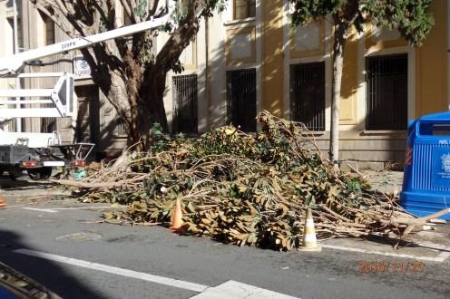 Los restos del árbol