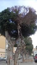 Tronco seco, calle Valencia
