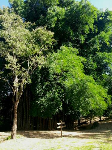 hi-mundim-bambuzal