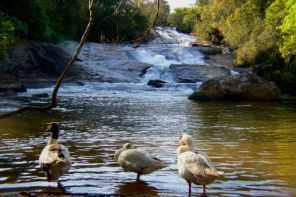 Oito cachoeiras para conhecer em Socorro, SP