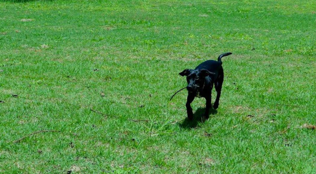 Doze lugares para você passear com seu cão em Rio Preto