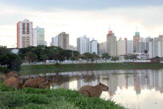 Rio Preto e suas famosas capivaras (Foto: Ricardo Boni)