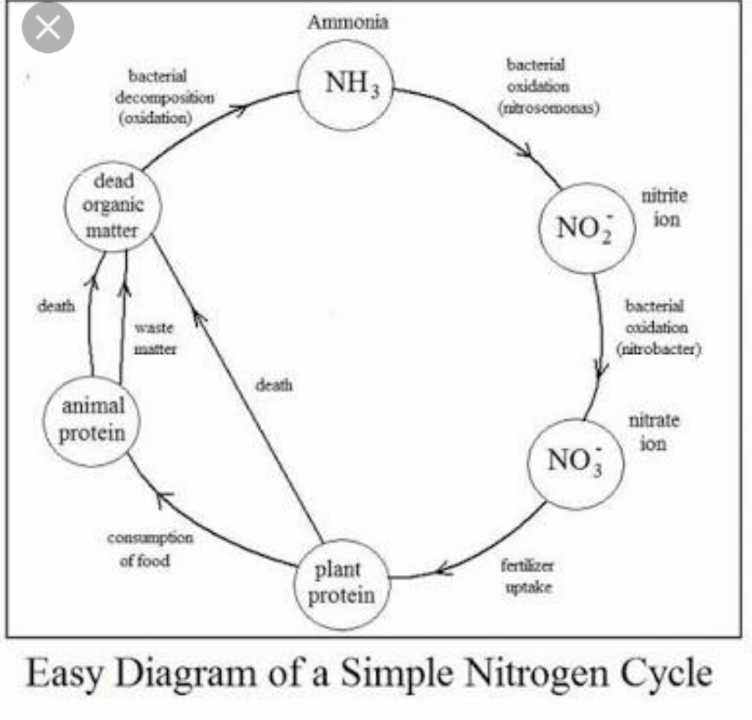 Sketch The Nitrogen Cycle