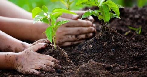 Instead of making April fool we can make April cool by planting trees and  to reduce pollution problem. - Brainly.in