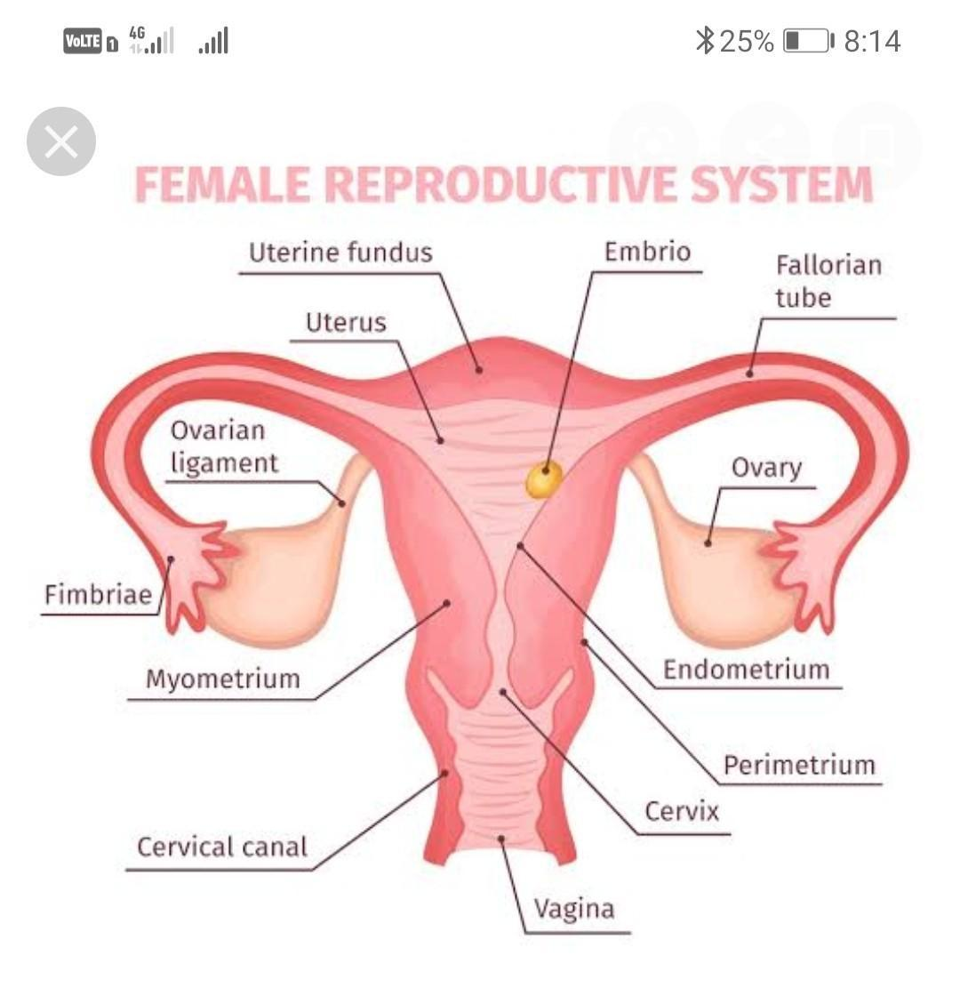 A Draw A Sectional View Of Human Female Reproductive