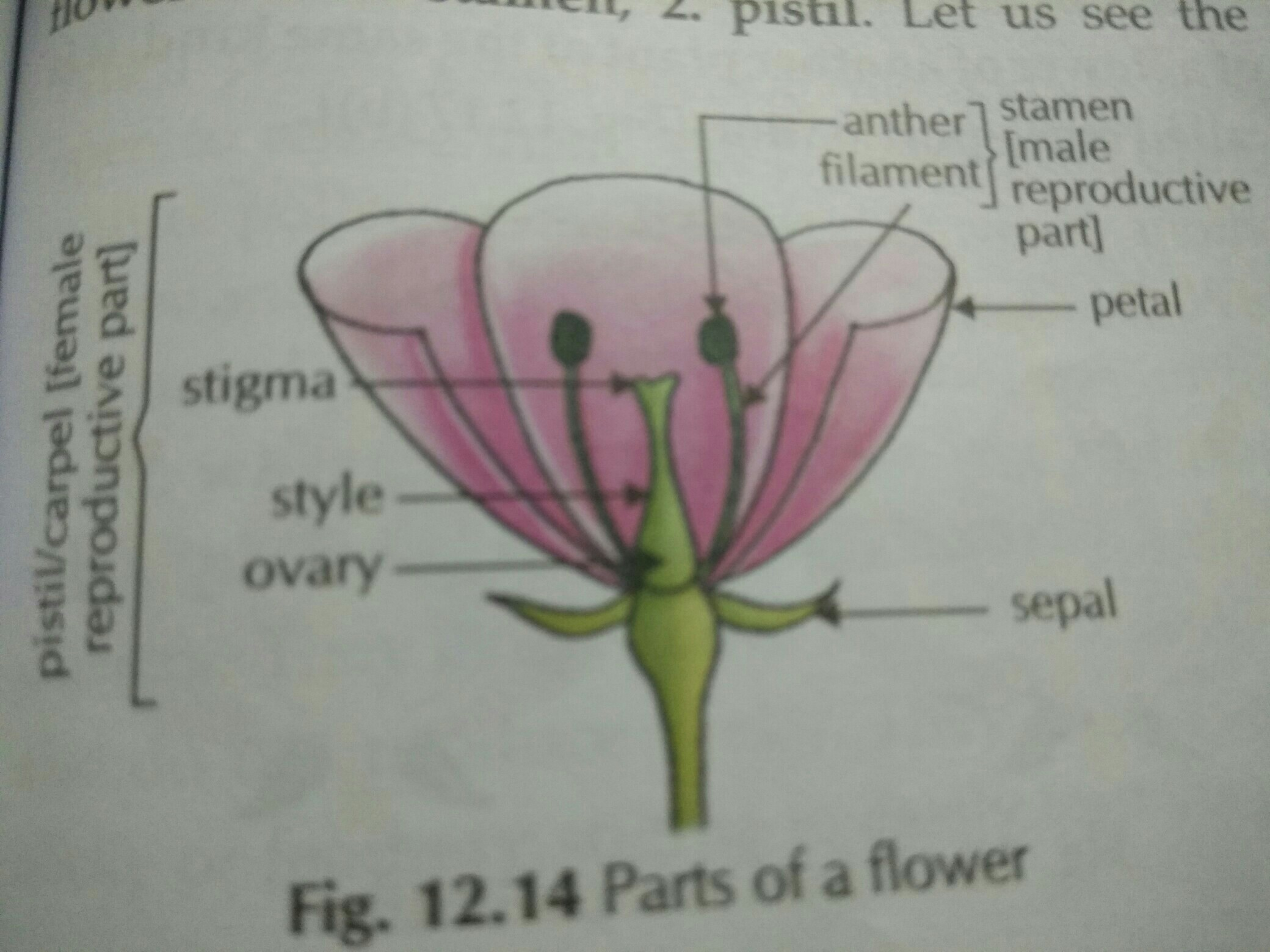 Female Reproductive Part Of Flower Is Called