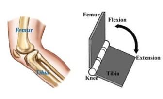 Image result for human joints hinge