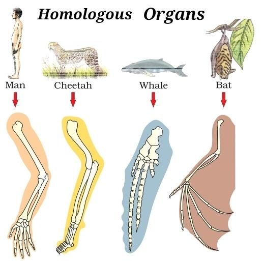 outcomes of evolution