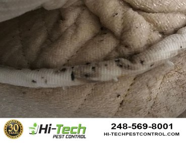damage-to-mattress-by-bed-bugs