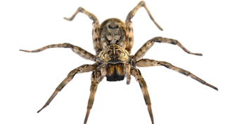 spider-bed-bug-control-and-extermination-services-in-michigan