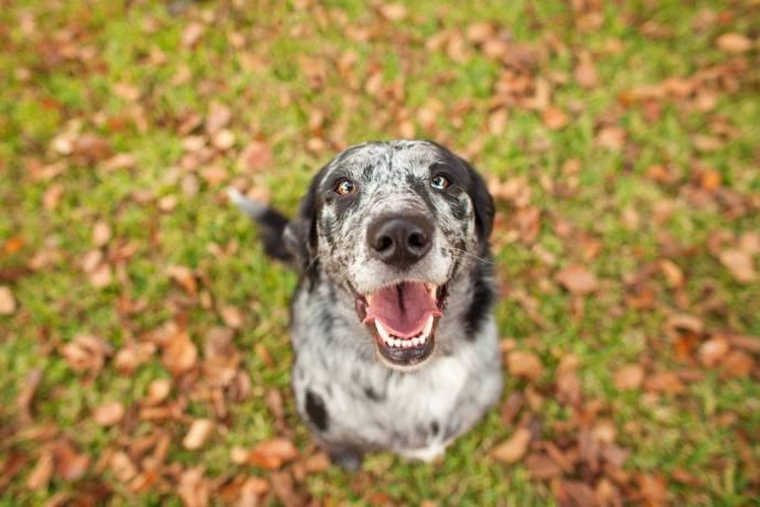 Dog Breath Normal