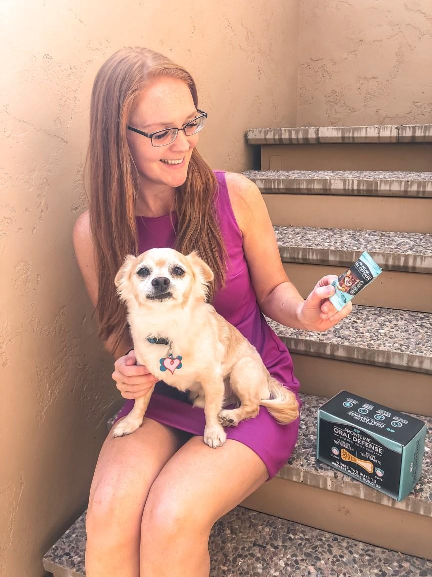 Blogger dog fail photo