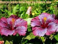 1Moorea Aroha Belle Fille