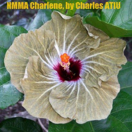 NMMA Charlene