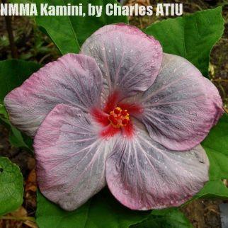 NMMA Kamini