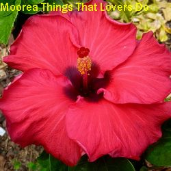 Moorea Things That Lovers Do