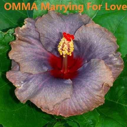 32 OMMA Marrying For Love