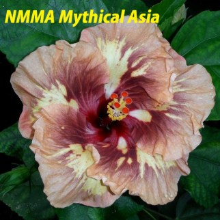 37 NMMA Mythical Asia